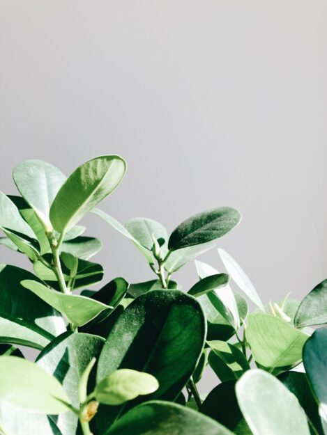 green plants up close on gray background
